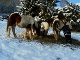 im_Schnee