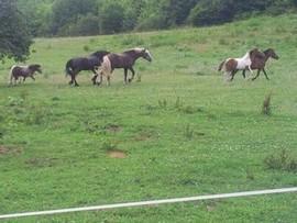 Pferde_ in_Bewegung